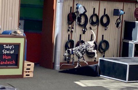 Animal Actors at Universal Studios